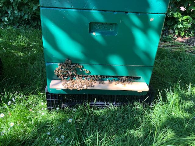 Bienenvölker aus Brauereigelände